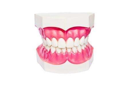 false teeth: teeth Stock Photo