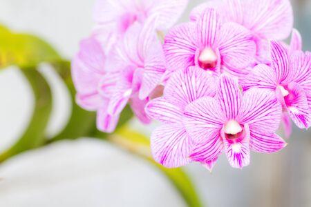 carpel: Beautiful pink orchid