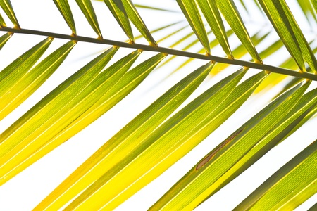 nuances: palm tree leaves