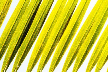 nuances: palm tree leaves