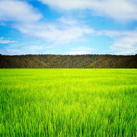 green field on blue sky Stock Photo - 11621488