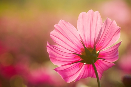 colorful flowers: Blossom pink flower