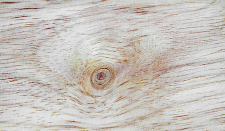 wood walls photo