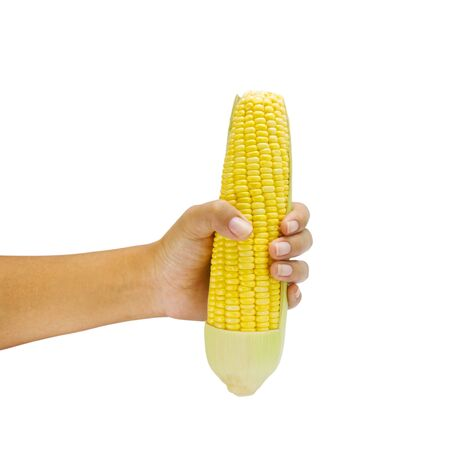 corn in hand isolated on a white background photo