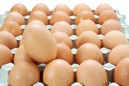 granja avicola: huevos en el cartón