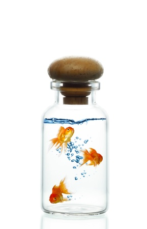 Three Goldfish in a closed jar Stock Photo