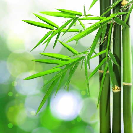 Bamboo leaves on green bokeh background photo