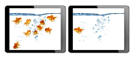 gold fish in tablet computer pc on white background photo