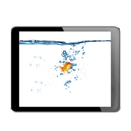 gold fish in tablet computer pc on white background Stock Photo - 15589090