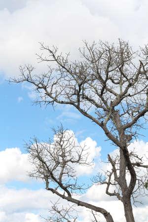 arboles secos: Los �rboles muertos. Foto de archivo