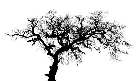 arboles secos: Los �rboles de sombra morir. Foto de archivo