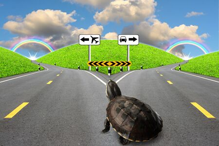 Abstraction of the journey by turtles.