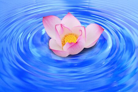 Pink lotus flower floating on the surface. Stock Photo - 11252809