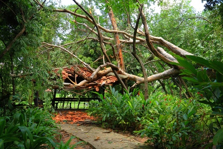 knocked over: Strong winds knocked over trees, down the hall