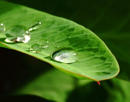Close-up Water drops on a leaf