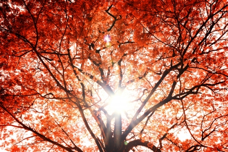 Background of the tree autumn