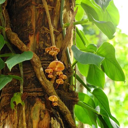 Fungus on a tree  photo