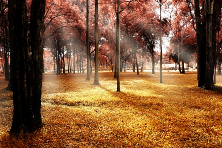 Autumn forest landscape  photo