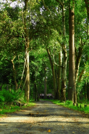 enveloped: Rural road in the forest  Stock Photo