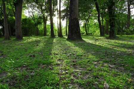 The evening light forest Stock Photo - 15407553