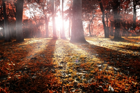 Illustration of autumn forest landscape Stock Illustration - 16130236