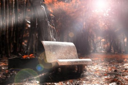 fantasy landscape: Chair in autumn forest