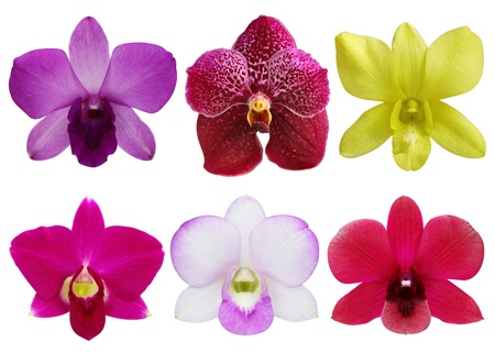 Collection of orchid flower on white background  photo
