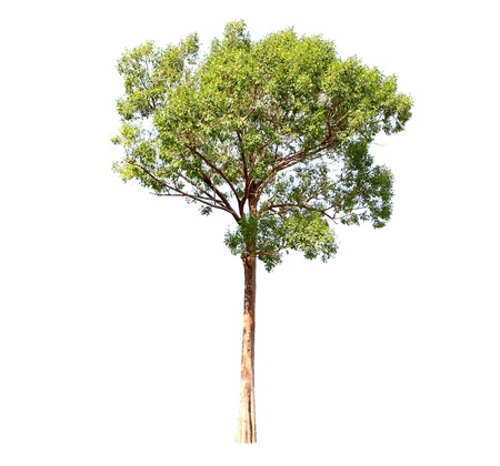 Trees on a white background Stock Photo - 16130627
