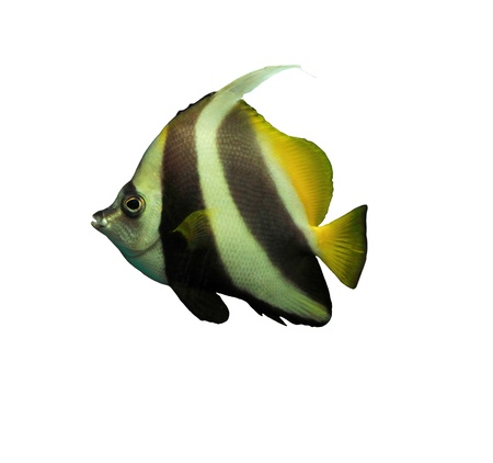 Tropical fish Stock Photo - 16602027
