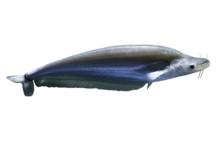Tropical fish Stock Photo - 16602024