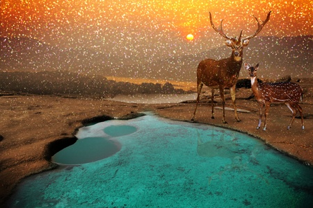 landscape with sundown and deer  photo