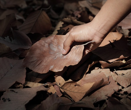 Hand holding a leaf  photo