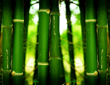 Background bamboo in bamboo forest  photo