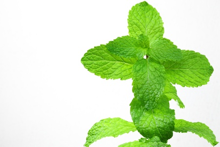 mint leaves: Mint leaves on a white background.