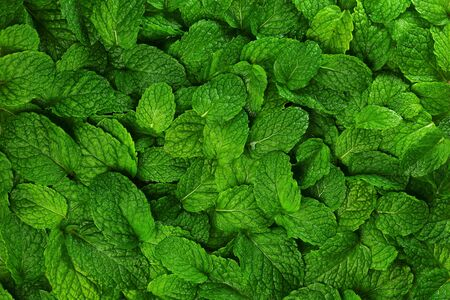 Close-up background fresh mint leaves. Stock Photo