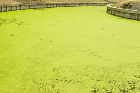 salvinia: Canal water with aquatic weeds.