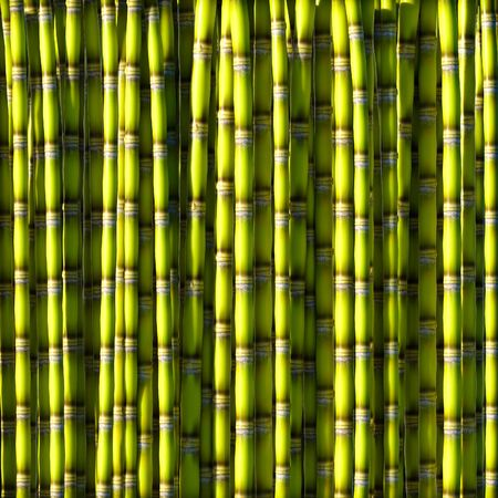 sugar cane: Sugar cane green background 3d rendering.