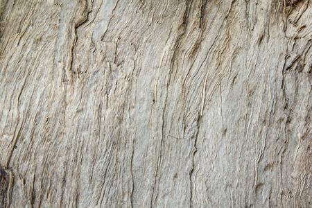 paleontologist: Texture of wood&bark