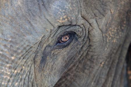 piteous: Elephan  eye
