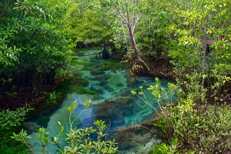 thapom: Krabi along song nam The root and crystal stream. freshwater meets with seawater from the mangrove forest, Krabi, Thailand