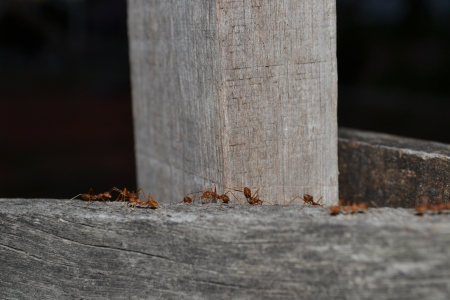 assiduous: Ant s nest