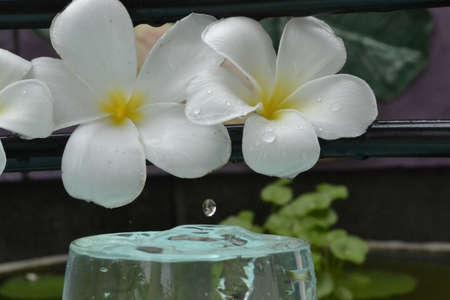 Rental liquid droplets