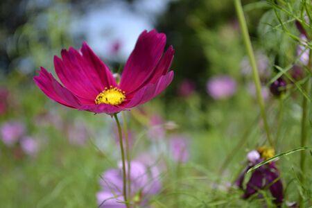 Starburst flowers Stock Photo - 15960146