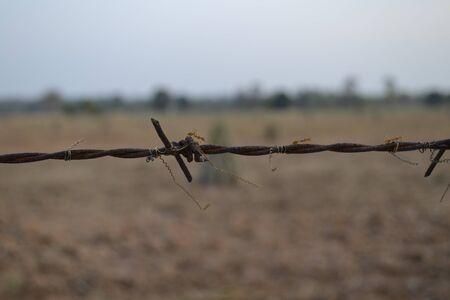 Cassava farm barbed wire fence  photo