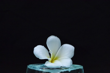 Plumeria flowers on water photo