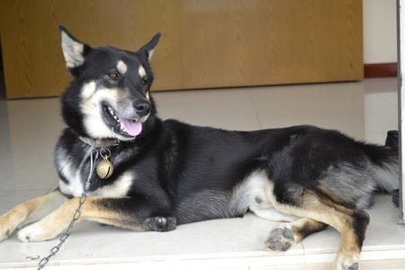 idealistic: Chained dogs sleep on the floor