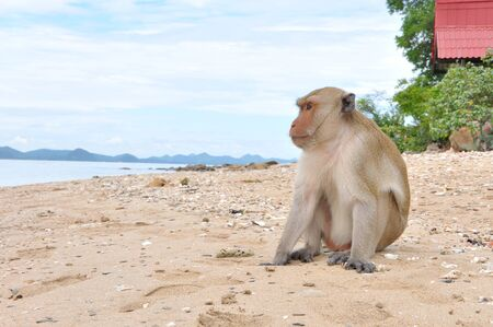 alone monkey on the beach photo