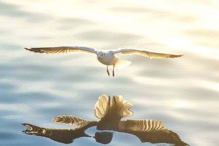 backlights: seagull Stock Photo