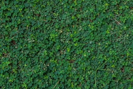Green plant capet Stok Fotoğraf