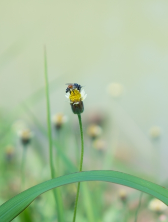 a bee is finding carpel of small flower  photo